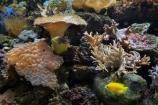 Coral-Coast;coral-reef;coral-reefs;Fij;Fiji-Islands;Korotogo;Kula-Eco-Park;Kula-Ecopark;marine;marine-life;marinelife;oceanlife;Pacific;reef;reefs;sealife;Sigatoka;South-Pacific;tourist-attraction;tourist-attractions;tropical-fish;tropical-fishes;tropical-reef;tropical-reefs;under-water;under_water;undersea;underwater;underwater-photo;underwater-photography;underwater-photos;Viti-Levu;Viti-Levu-Island