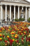 6708;bloom;blooming;blooms;blossom;blossoming;blossoms;britain;building;buildings;classical;column;columns;england;Europe;flower;flowers;fresh;G.B.;GB;great-britain;grow;growth;heritage;historic;historic-building;historic-buildings;historical;historical-building;historical-buildings;history;kingdom;london;old;renew;Royal-Exchange;season;seasonal;seasons;spring;springtime;The-City-of-London;The-Royal-Exchange;tradition;traditional;tulip;tulips;U.K.;uk;united;United-Kingdom