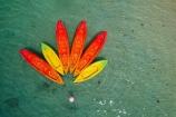 adventure-tourism;aerial;Aerial-drone;Aerial-drones;aerial-image;aerial-images;aerial-photo;aerial-photograph;aerial-photographs;aerial-photography;aerial-photos;aerial-view;aerial-views;aerials;beach;beaches;boat;boats;canoe;canoeing;canoes;colorful;colourful;Cook-Is;Cook-Island;Cook-Islands;Drone;Drones;island;islands;kayak;kayaking;kayaks;Muri;Muri-Beach;Muri-Lagoon;orange;Pacific;Pacific-Is;Pacific-Island;Pacific-Islands;Pacific-Ocean;Quadcopter-aerial;Quadcopters-aerials;Rarotonga;sea-kayak;sea-kayaking;sea-kayaks;South-Pacific;tourism;tropical;tropical-island;tropical-islands;U.A.V.-aerial;UAV-aerials;vacation;vacations;water;yellow