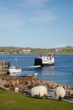 boat;boats;Britain;Calidonian-MacBrayne-Ferries;Calidonian-MacBrayne-Ferry;car-ferries;car-ferry;ferries;ferry;Fionnphort;Fionnphort-_-Iona-Ferry;Fionnphort-Ferry-Terminal;Fionnphort-Harbour;Fionphort-_-Iona-Ferry;Fionphort-Ferry-Terminal;G.B.;GB;Great-Britain;Highlands;Inner-Hebrides;Iona;Iona-_-Fionnphort-Ferry;Iona-_-Fionphort-Ferry;Iona-_-Mull-Ferry;Iona-Abbey;Island-of-Mull;Isle-of-Mull;livestock;Mull;Mull-_-Iona-Ferry;Mull-Island;ocean;oceans;passenger-ferries;passenger-ferry;Ross-of-Mull;Scotland;Scottish-Highlands;sea;sheep;ship-ships;shipping;Sound-of-Iona;stock;transport;transportation;travel;U.K.;UK;United-Kingdom;vehicle-ferries;vehicle-ferry;vessel;vessels;water