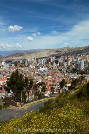 accommodation;apartment;apartments;Bolivia;capital;Capital-of-Bolivia;Chuqi-Yapu;cities;city;cityscape;cityscapes;condo;condominium;condominiums;condos;flower;flowers;high-density-housing;house;houses;housing;Killi-Killi-Lookout;Killi-Killi-Viewpoint;La-Paz;Latin-America;lookout;lookouts;Mirador-Killi-Killi;Nuestra-Señora-de-La-Paz;residence;residences;Sopocachi;Sopocachi-District;South-America;Sth-America;The-Americas;view;viewpoint;viewpoints;views;yellow;yellow-flower;yellow-flowers