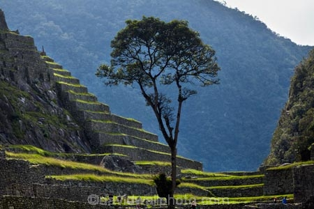 agricultural-terraces;ancient;ancient-culture;archaeology;attraction;building;buildings;Camino-Inca;Camino-Inka;crop-terraces;cultivation-terraces;Cusco-Region;destination;growing-terraces;heritage;historic;historic-building;historic-buildings;historical;historical-building;historical-buildings;history;horticultural-terraces;Inca;Inca-Citadel;Inca-City;Inca-Ruins;Inca-Trail;Inka;Latin-America;lost-city;Machu-Picchu;Machu-Pichu;Machupicchu-District;old;people;person;Peru;Republic-of-Peru;retaining-wall;retaining-walls;ruin;ruins;Sacred-Valley;Sacred-Valley-of-the-Incas;South-America;stepped;Sth-America;terrace;terraced;terraces;terracing;tourism;tourist;tourist-attraction;tourist-site;tourist-sites;tourists;tradition;traditional;tree;trees;UN-world-heritage-area;UN-world-heritage-site;UNESCO-World-Heritage-area;UNESCO-World-Heritage-Site;united-nations-world-heritage-area;united-nations-world-heritage-site;Urubamba-Province;Urubamba-Valley;visitors;world-heritage;world-heritage-area;world-heritage-areas;World-Heritage-Park;World-Heritage-site;World-Heritage-Sites