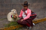 alpaca;alpacas;Andean;animal;Cusco;Cuzco;indigenous;indigenous-Peruvian;indigenous-Peruvians;Latin-America;Native-Peruvian;Native-Peruvians;people;person;Peru;Peruvian;Peruvians;Quechua;Quechua-People;Republic-of-Peru;South-America;Sth-America;stock;tourism;traditional-clothes;traditional-costume;traditional-costumes;traditional-dress;travel;UN-world-heritage-area;UN-world-heritage-site;UNESCO-World-Heritage-area;UNESCO-World-Heritage-Site;united-nations-world-heritage-area;united-nations-world-heritage-site;Vicugna-pacos;world-heritage;world-heritage-area;world-heritage-areas;World-Heritage-Park;World-Heritage-site;World-Heritage-Sites