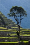 agricultural-terraces;ancient;ancient-culture;archaeology;attraction;building;buildings;Camino-Inca;Camino-Inka;crop-terraces;cultivation-terraces;Cusco-Region;destination;growing-terraces;heritage;historic;historic-building;historic-buildings;historical;historical-building;historical-buildings;history;horticultural-terraces;Inca;Inca-Citadel;Inca-City;Inca-Ruins;Inca-Trail;Inka;Latin-America;llama;llamas;lost-city;Machu-Picchu;Machu-Pichu;Machupicchu-District;old;people;person;Peru;Republic-of-Peru;retaining-wall;retaining-walls;ruin;ruins;Sacred-Valley;Sacred-Valley-of-the-Incas;South-America;stepped;Sth-America;terrace;terraced;terraces;terracing;tourism;tourist;tourist-attraction;tourist-site;tourist-sites;tourists;tradition;traditional;tree;trees;UN-world-heritage-area;UN-world-heritage-site;UNESCO-World-Heritage-area;UNESCO-World-Heritage-Site;united-nations-world-heritage-area;united-nations-world-heritage-site;Urubamba-Province;Urubamba-Valley;visitors;world-heritage;world-heritage-area;world-heritage-areas;World-Heritage-Park;World-Heritage-site;World-Heritage-Sites