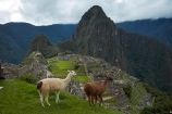 anamal;ancient;ancient-culture;archaeology;attraction;building;buildings;camelid;camelids;Camino-Inca;Camino-Inka;Cusco-Region;destination;domestic-stock;heritage;historic;historic-building;historic-buildings;historical;historical-building;historical-buildings;history;Huayna-Picchu;Huayna-Picchu-Peak;Inca;Inca-Citadel;Inca-City;Inca-Ruins;Inca-site;Inca-Trail;Inka;Lama;Lama-Glama;lamoids;Latin-America;Llama;Llamas;lost-city;Machu-Picchu;Machu-Pichu;Machupicchu-District;old;Peru;Republic-of-Peru;ruin;ruins;Sacred-Valley;Sacred-Valley-of-the-Incas;seven-wonders;seven-wonders-of-the-world;South-America;Sth-America;stock;tourism;tourist-attraction;tourist-site;tourist-sites;tradition;traditional;travel;UN-world-heritage-area;UN-world-heritage-site;UNESCO-World-Heritage-area;UNESCO-World-Heritage-Site;united-nations-world-heritage-area;united-nations-world-heritage-site;Urubamba-Province;Urubamba-Valley;wonders-of-the-world;world-heritage;world-heritage-area;world-heritage-areas;World-Heritage-Park;World-Heritage-site;World-Heritage-Sites