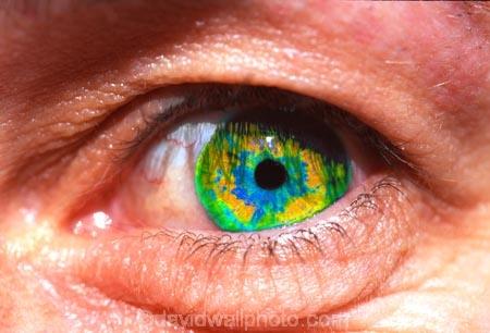 blue;close-up;close-ups;close_up;close_ups;closeup;closeups;cornea;detail;details;eye;eyeball;eyeballs;eyelash;eyelashes;eyelid;eyelids;eyes;female;females;green;iris;look;looking;looks;pupil;pupils;sense;senses;sight;skin;socket;vision;watch;watches;watching;woman;women