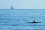 America;American;CA;California;California-1;California-State-Route-1;Central-Coast;coast;coastal;coastline;coastlines;coasts;County-of-Santa-Barbara;dolphin;dolphins;drilling-platform;drilling-platforms;drilling-rig;drilling-rigs;drillrig;drillrigs;El-Capitan-State-Beach;El-Capitán-State-Beach;environment;environmental;marine-mammal;marine-mammals;ocean;oceans;offshore-rig;offshore-rigs;oil-platform;oil-platforms;oil-rig;oil-rigs;oilrig;oilrigs;Pacific-Coast;Pacific-Coast-Highway;Pacific-Coast-Road;Pacific-Ocean;rig;rigs;Santa-Barbara-County;sea;seas;shore;shoreline;shorelines;shores;States;The-Central-Coast;U.S.A;United-States;United-States-of-America;USA;water;West-Coast;West-United-States;West-US;West-USA;Western-United-States;Western-US;Western-USA;wildlife