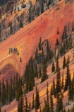 America;American-Southwest;Anvil-Mountai;Anvil-Mt;Anvil-Mtn;brown,-red-and-yellow-iron-oxide-colors;CO;Colorado;Colorado-Plateau;Colorado-Plateau-Province;Colorado-Scenic-and-Historic-Byway-System;conifer;conifers;forest;forests;iron-ore-rock;iron-ore-rocks;iron-oxide;Million-Dollar-Highway;Mount-Anvil;Mt-Anvil;reddish;Rocky-Mountains;San-Juan-County;San-Juan-Mountains;San-Juan-Skyway;San-Juan-Skyway-Scenic-Byway;Silverton;South-west-United-States;South-west-US;South-west-USA;South-western-United-States;South-western-US;South-western-USA;Southwest-United-States;Southwest-US;Southwest-USA;Southwestern-United-States;Southwestern-US;Southwestern-USA;States;the-Southwest;tree;trees;U.S.-Highway-550;U.S.A;United-States;United-States-of-America;US-550;USA;wood;woods