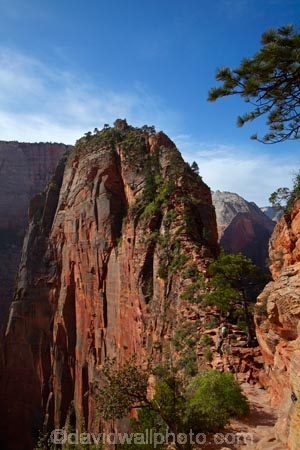 adventure;adventurous;America;American-Southwest;Angels-Landing;Angels-Landing-track;Angels-Landing-trail;Angel's-Landing;Angel's-Landing-track;Angel's-Landing-trail;bluff;bluffs;cliff;cliffs;danger;dangerous;dangerous-hike;dangerous-track;hiker;hikers;hiking-path;hiking-paths;hiking-track;hiking-tracks;hiking-trail;hiking-trails;lookout;lookouts;national-parks;overlook;path;paths;pathway;pathways;people;person;route;routes;Scouts-Lookout;South-west-United-States;South-west-US;South-west-USA;South-western-United-States;South-western-US;South-western-USA;Southwest-United-States;Southwest-US;Southwest-USA;Southwestern-United-States;Southwestern-US;Southwestern-USA;States;the-Southwest;tourism;tourist;tourists;track;tracks;trail;trails;tramping-track;tramping-tracks;tramping-trail;tramping-trails;U.S.A;United-States;United-States-of-America;USA;UT;Utah;view;viewpoint;viewpoints;views;walker;walkers;walking-path;walking-paths;walking-track;walking-tracks;walking-trail;walking-trails;walkway;walkways;Zion;Zion-Canyon;Zion-N.P.;Zion-National-Park;Zion-NP
