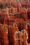 America;American-Southwest;badland;badlands;Bryce-Amphitheater;Bryce-Amphitheatre;Bryce-Canyon;Bryce-Canyon-N.P.;Bryce-Canyon-National-Park;Bryce-Canyon-NP;clay;column;columns;earth-pyramid;earth-pyramids;eroded;erosion;fairy-chimney;fairy-chimneys;formation;formations;geological;geology;hiking-path;hiking-paths;hiking-track;hiking-tracks;hiking-trail;hiking-trails;hoodoo;hoodoos;Inspiration-Point;layer;layers;lookout;lookouts;national-park;national-parks;natural-geological-formation;natural-geological-formations;natural-tower;natural-towers;Navaho-Loop;Navaho-Trail;North-America;overlook;path;paths;pathway;pathways;Paunsaugunt-Plateau;pillar;pillars;pinnacle;pinnacles;rock;rock-chimney;rock-chimneys;rock-column;rock-columns;rock-formation;rock-formations;rock-pillar;rock-pillars;rock-pinnacle;rock-pinnacles;rock-spire;rock-spires;rock-tower;rock-towers;rocks;route;routes;Sandstone;South-west-United-States;South-west-US;South-west-USA;South-western-United-States;South-western-US;South-western-USA;Southwest-United-States;Southwest-US;Southwest-USA;Southwestern-United-States;Southwestern-US;Southwestern-USA;States;stone;Sunset-Point;tent-rock;tent-rocks;the-Southwest;track;tracks;trail;trails;tramping-track;tramping-tracks;tramping-trail;tramping-trails;U.S.A;United-States;United-States-of-America;unusual-natural-feature;unusual-natural-features;unusual-natural-formation;unusual-natural-formations;USA;UT;Utah;view;viewpoint;viewpoints;views;walking-path;walking-paths;walking-track;walking-tracks;walking-trail;walking-trails;walkway;walkways;weathered;weathering;wilderness;wilderness-area;wilderness-areas
