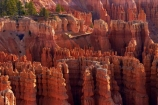 America;American-Southwest;badland;badlands;Bryce-Amphitheater;Bryce-Amphitheatre;Bryce-Canyon;Bryce-Canyon-N.P.;Bryce-Canyon-National-Park;Bryce-Canyon-NP;clay;column;columns;earth-pyramid;earth-pyramids;eroded;erosion;fairy-chimney;fairy-chimneys;formation;formations;geological;geology;hiking-path;hiking-paths;hiking-track;hiking-tracks;hiking-trail;hiking-trails;hoodoo;hoodoos;Inspiration-Point;layer;layers;lookout;lookouts;national-park;national-parks;natural-geological-formation;natural-geological-formations;natural-tower;natural-towers;Navajo-Loop;Navajo-Loop-path;Navajo-Loop-track;Navajo-Loop-trail;Navajo-Loop-walk;Navajo-path;Navajo-track;Navajo-trail;Navajo-walk;North-America;overlook;path;paths;pathway;pathways;Paunsaugunt-Plateau;pillar;pillars;pinnacle;pinnacles;rock;rock-chimney;rock-chimneys;rock-column;rock-columns;rock-formation;rock-formations;rock-pillar;rock-pillars;rock-pinnacle;rock-pinnacles;rock-spire;rock-spires;rock-tower;rock-towers;rocks;route;routes;Sandstone;South-west-United-States;South-west-US;South-west-USA;South-western-United-States;South-western-US;South-western-USA;Southwest-United-States;Southwest-US;Southwest-USA;Southwestern-United-States;Southwestern-US;Southwestern-USA;States;stone;Sunset-Point;tent-rock;tent-rocks;the-Southwest;track;tracks;trail;trails;tramping-track;tramping-tracks;tramping-trail;tramping-trails;U.S.A;United-States;United-States-of-America;unusual-natural-feature;unusual-natural-features;unusual-natural-formation;unusual-natural-formations;USA;UT;Utah;view;viewpoint;viewpoints;views;walking-path;walking-paths;walking-track;walking-tracks;walking-trail;walking-trails;walkway;walkways;weathered;weathering;wilderness;wilderness-area;wilderness-areas