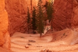America;American-Southwest;bluff;bluffs;Bryce-Amphitheater;Bryce-Amphitheatre;Bryce-Canyon;Bryce-Canyon-N.P.;Bryce-Canyon-National-Park;Bryce-Canyon-NP;canyon;canyons;cliff;cliffs;hairpin-bend;hairpin-bends;hairpin-corner;hairpin-corners;hiker;hikers;hiking-path;hiking-paths;hiking-track;hiking-tracks;hiking-trail;hiking-trails;national-park;national-parks;Navajo-Loop;Navajo-Loop-path;Navajo-Loop-track;Navajo-Loop-trail;Navajo-Loop-walk;Navajo-path;Navajo-track;Navajo-trail;Navajo-walk;path;paths;pathway;pathways;Paunsaugunt-Plateau;people;person;route;routes;South-west-United-States;South-west-US;South-west-USA;South-western-United-States;South-western-US;South-western-USA;Southwest-United-States;Southwest-US;Southwest-USA;Southwestern-United-States;Southwestern-US;Southwestern-USA;States;steep;switchback;switchback-track;switchback-tracks;switchbacks;the-Southwest;tourism;tourist;tourists;track;tracks;trail;trails;tramping-track;tramping-tracks;tramping-trail;tramping-trails;U.S.A;United-States;United-States-of-America;USA;UT;Utah;walker;walkers;walking-path;walking-paths;walking-track;walking-tracks;walking-trail;walking-trails;walkway;walkways;zig-zag;zig-zag-trail;zig-zag-trails;zig-zags;zig_zag;zig_zag-path;zig_zags;zigzag;zigzag-track;zigzags