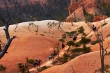 America;American-Southwest;badland;badlands;Bryce-Amphitheater;Bryce-Amphitheatre;Bryce-Canyon;Bryce-Canyon-N.P.;Bryce-Canyon-National-Park;Bryce-Canyon-NP;Bryce-Canyon-Rides;Bryce-National-Park-Horseback-Tours;Canyon-Trail-Rides;clay;cowboy;cowboys;equestrian;eroded;erosion;formation;formations;geology;hiking-path;hiking-paths;hiking-track;hiking-tracks;hiking-trail;hiking-trails;horse;horse-rider;horse-riders;horse-riding;horse-tour;horse-tours;horse-trail;horse-trails;horse-trek;horse-trekker;horse-trekkers;horse-trekking;horse-treks;horseback-tours;horses;layer;layers;national-park;national-parks;North-America;path;paths;pathway;pathways;Paunsaugunt-Plateau;people;person;Queens-Garden-Path;Queens-Garden-Trackl;Queens-Garden-Trail;Queens-Garden-walk;Queens-Garden-Path;Queens-Garden-Track;Queens-Garden-Trail;Queens-Garden-walk;route;routes;South-west-United-States;South-west-US;South-west-USA;South-western-United-States;South-western-US;South-western-USA;Southwest-United-States;Southwest-US;Southwest-USA;Southwestern-United-States;Southwestern-US;Southwestern-USA;States;the-Southwest;track;tracks;trail;trails;tramping-track;tramping-tracks;tramping-trail;tramping-trails;U.S.A;United-States;United-States-of-America;USA;UT;Utah;walking-path;walking-paths;walking-track;walking-tracks;walking-trail;walking-trails;walkway;walkways;weathered;weathering
