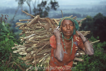 africa;african;africans;black;ethnic;female;people;person;persons;portrait;portraits;tradition;traditional;costume;costumes;traditional-costume;traditional-costumes;culture;cultural;tribe;tribal;east-africa;central-africa;heavy;load;fire-wood;hard-work;short;pygmy;pigmy;democratic-republic-of-congo