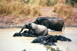 africa;african;africans;burkina-faso;elephant;elephants;pachyderm-;pachyderms;pond;ponds;pool;drinking;drink;wet;mamal;mamals;wildlife;wild;west-africa;africa