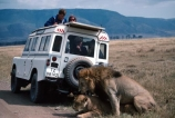 east-africa;africa;african;animal;animals;mammal;mammals;wild;wildlife;zoology;plain;plains;savannah;savanna;savanah;savana;grassland;grasslands;game-park;game-parks;cat;cats;feline;felines;predator;predators;carnivore;carnivores;lions;lion;Panthera-leo;safari;safaris;game-viewing;rift-valley;reserve;reserves;ngorongoro-crater;ngorongoro-conservation-area;tanzania;tanzanian;mate;mating;intercourse;sex;copulate;copulation;copulating;male;males;female;females;mane;manes;landrover;landrovers;four-wheel-drive;four-wheel-dives;4wd;4wds;4x4;4x4s;tourists;tourist;game-view