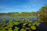 Africa;aquatic-plant;aquatic-plants;boat;boats;Botswana;canoe;canoes;Cyperaceae;Cyperus-papyrus;delta;deltas;dugout;dugout-canoe;dugout-canoes;dugouts;Endorheic-basin;inland-delta;internal-drainage-systems;lily-pad;lily-pads;logboat;makoro;makoros;mekoro;mekoros;mokoro;mokoro-safari;mokoros;monoxylon;Nymphaeaceae;Okavango;Okavango-Delta;Okavango-Swamp;paper-reed;paper-reeds;papyrus-reed;papyrus-reeds;papyrus-sedge;pirogue;pirogues;plant;plants;reed;reeds;river-delta;Seven-Natural-Wonders-of-Africa;Southern-Africa;water-lilies;water-lily;water-lily-pad;water-lily-pads;water-plant;water_lilies;water_lily;waterlilies;waterlily;waterlily-pad;waterlily-pads;waterplants
