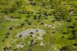 aerial;aerial-image;aerial-images;aerial-photo;aerial-photograph;aerial-photographs;aerial-photography;aerial-photos;aerial-view;aerial-views;aerials;Africa;African-buffalo;African-buffaloes;animal;animals;Botswana;buffalo;buffalo-herd;buffalo-herds;buffaloes;cape-buffalo;cape-buffaloes;delta;deltas;Endorheic-basin;herd;herds;inland-delta;internal-drainage-systems;mammal;mammals;Okavango;Okavango-Delta;Okavango-Swamp;river-delta;Seven-Natural-Wonders-of-Africa;Southern-Africa;swamp;swampland;swamps;Syncerus-caffer;Syncerus-caffer-caffer;wildlife