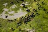 aerial;aerial-image;aerial-images;aerial-photo;aerial-photograph;aerial-photographs;aerial-photography;aerial-photos;aerial-view;aerial-views;aerials;Africa;African-buffalo;African-buffaloes;animal;animals;Botswana;buffalo;buffalo-herd;buffalo-herds;buffaloes;cape-buffalo;cape-buffaloes;delta;deltas;Endorheic-basin;flood-plain;flood-plains;flood_plain;flood_plains;floodplain;floodplains;herd;herds;inland-delta;internal-drainage-systems;mammal;mammals;Okavango;Okavango-Delta;Okavango-Swamp;plain;plains;river-delta;Seven-Natural-Wonders-of-Africa;Southern-Africa;stampede;stampedes;swamp;swampland;swamps;Syncerus-caffer;Syncerus-caffer-caffer;wildlife