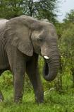 Africa;African-bush-elephant;African-bush-elephants;African-elephant;African-elephants;animal;animals;Botswana;elephant;elephants;Loxodonta-africana;mammal;mammals;Nata-_-Kasane-Road;pachyderm;pachyderms;Southern-Africa;wildlife
