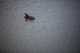 aerial;aerial-image;aerial-images;aerial-photo;aerial-photograph;aerial-photographs;aerial-photography;aerial-photos;aerial-view;aerial-views;aerials;Africa;African;African-animals;African-wildlife;animal;animals;Botswana;game-park;game-parks;game-reserve;game-reserves;hippo;hippopotami;hippopotamus;Hippopotamus-amphibius;hippopotamuses;hippos;mammal;mammals;Okavango;Okavango-Delta;Okavango-Swamp;safari;safaris;Southern-Africa;swamp;wildlife;wildlife-park;wildlife-parks;wildlife-reserve;wildlife-reserves;yawn;yawning