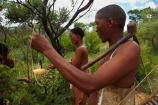 Africa;African;African-bush;bush;bush-potato;bush-potatoes;Bushman;Bushman-Living-Museum;Bushmanland;Bushmen;cultural;cultural-exchange;culture;edible-root;edible-roots;forager-society;Grashoek-Living-Museum;Grashoek-village;hunter_gatherer;Hunting-and-gathering;Ju-Hoansi_San-Living-Museum;JuHoansi;JuHoansi_San-people;Living-Museum;Living-Museum-of-the-Ju-Hoansi_San;Living-Museum-of-the-JuHoansi_San;Living-Museums;man;men;Namibia;Otjozondjupa-District;Otjozondjupa-Region;people;person;San;San-Living-Museum;San-people;Southern-Africa;tradition;traditional;Traditional-Bushman-Culture;traditional-clothing;traditional-costume;traditional-dress;Traditional-San-Culture;tree-root;tree-roots;tribe