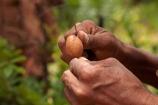 Africa;African;African-bush;bush;bush-potato;bush-potatoes;Bushman;Bushman-Living-Museum;Bushmanland;Bushmen;cultural;cultural-exchange;culture;edible-root;edible-roots;forager-society;Grashoek-Living-Museum;Grashoek-village;hunter_gatherer;Hunting-and-gathering;Ju-Hoansi_San-Living-Museum;JuHoansi;JuHoansi_San-people;Living-Museum;Living-Museum-of-the-Ju-Hoansi_San;Living-Museum-of-the-JuHoansi_San;Living-Museums;Namibia;Otjozondjupa-District;Otjozondjupa-Region;people;person;San;San-Living-Museum;San-people;Southern-Africa;tradition;traditional;Traditional-Bushman-Culture;Traditional-San-Culture;tree-root;tree-roots;tribe