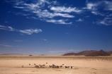 Africa;african;animal;animals;Antelope;Antelopes;Aus;desert;desert-horse;desert-horses;deserts;dry;equestrian;expanse;feral-desert-horses;feral-horse;feral-horses;game-viewing;Garub;Garub-waterhole;Gemsbok;gemsboks;herd;herds;horse;horses;Mammal;Mammals;Namib-Desert;Namib-Naukluft-N.P.;Namib-Naukluft-National-Park;Namib-Naukluft-NP;Namib_Naukluft-N.P.;Namib_Naukluft-National-Park;Namib_Naukluft-NP;Namibia;nature;Oryx;Oryx-gazella;oryxes;oryxs;Southern-Africa;Southern-Namiba;water-hole;water-holes;water_hole;water_holes;waterhole;waterholes;Wild;wild-desert-horses;wild-horse;wild-horses;wilderness;Wildlife