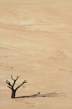 900-year-old-trees;Africa;clay-pan;clay-pans;dead-tree;dead-trees;Dead-Vlei;Deadvlei;desert;deserts;dry-lake;dry-lake-bed;dry-lake-beds;dry-lakes;lake-bed;Namib-Desert;Namib-Naukluft-N.P.;Namib-Naukluft-National-Park;Namib-Naukluft-NP;Namib_Naukluft-N.P.;Namib_Naukluft-National-Park;Namib_Naukluft-NP;Namibia;national-park;national-parks;pan;reserve;reserves;salt-pan;salt-pans;Sossusvlei;Southern-Africa;tree-trunk;tree-trunks;vlei;white-clay-pan;white-pan