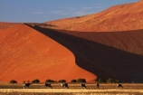 africa;african;Animal;Animals;Antelope;Antelopes;arid;big-dunes;desert;deserts;dry;dune;dunes;expanse;Gemsbok;gemsboks;giant-dune;giant-dunes;giant-sand-dune;giant-sand-dunes;hot;huge-dunes;large-dunes;Mammal;Mammals;Namib-Desert;Namib-Naukluft-N.P.;Namib-Naukluft-National-Park;Namib-Naukluft-NP;Namib_Naukluft-N.P.;Namib_Naukluft-National-Park;Namib_Naukluft-NP;Namibia;national-park;national-parks;natural;Nature;orange-sand;Oryx;Oryx-gazella;oryxes;oryxs;remote;remoteness;reserve;reserves;sand;sand-dune;sand-dunes;sand-hill;sand-hills;sand_dune;sand_dunes;sand_hill;sand_hills;sanddune;sanddunes;sandhill;sandhills;sandy;Southern-Africa;Wild;wilderness;Wildlife