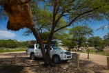 4wd;4wds;4wds;4x4;4x4s;4x4s;Africa;african;big-large;bird-nest;bird-nests;birds-nest;birds-nests;Bushlore;Bushlore-4x4;Bushlore-4x4-camper;Camp;Camp-Ground;Camp-Grounds;Camp-Site;Camp-Sites;camper;campers;campground;campgrounds;Camping;Camping-Area;Camping-Areas;Camping-Ground;Camping-Grounds;Camping-Site;Camping-Sites;Caravan-Park;Caravan-Parks;colonies;colony;communities;community;double-cab-hilux;Etosha-N.P.;Etosha-National-Park;Etosha-NP;flock;four-by-four;four-by-fours;four-wheel-drive;four-wheel-drives;game-park;game-parks;game-reserve;game-reserves;giant-nest;group;Hilux;hilux-camper;Hiluxes;Holiday;Holiday-Park;Holiday-Parks;holidays;home;huge;huge-nest;nambia;Namibia;namibian;national-park;national-parks;nest;nests;Okaukuejo;Okaukuejo-Camp;Okaukuejo-camp-ground;Okaukuejo-camp-site;Okaukuejo-campground;Okaukuejo-campsite;Okaukuejo-Rest-Camp;roof-tent;roof-tents;sociable;Sociable-Weaver-Nest;Sociable-Weavers-Nest;social;Social-Weaver-Nest;Social-Weavers-Nest;Southern-Africa;sports-utility-vehicle;sports-utility-vehicles;suv;suvs;Toyota;toyota-camper;Toyota-Hilux;Toyota-Hiluxes;Toyotas;tree;trees;twin-cab-hilux;vacation;vacations;vehicle;vehicles;weaver;weavers;wildlife-park;wildlife-parks;wildlife-reserve;wildlife-reserves