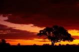 Africa;dusk;Etosha-N.P.;Etosha-National-Park;Etosha-NP;evening;game-park;game-parks;game-reserve;game-reserves;Namibia;national-park;national-parks;night;night_time;nightfall;Okaukuejo;Okaukuejo-Camp;Okaukuejo-Rest-Camp;orange;silhouette;silhouettes;skies;sky;Southern-Africa;sunset;sunsets;tree;trees;twilight;wildlife-park;wildlife-parks;wildlife-reserve;wildlife-reserves