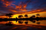 Africa;break-of-day;calm;dawn;dawning;daybreak;Etosha-N.P.;Etosha-National-Park;Etosha-NP;first-light;game-park;game-parks;game-reserve;game-reserves;morning;Namibia;national-park;national-parks;Okaukuejo;Okaukuejo-camp-ground;Okaukuejo-camp-site;Okaukuejo-campground;Okaukuejo-campsite;Okaukuejo-Rest-Camp;orange;placid;quiet;reflected;reflection;reflections;serene;smooth;Southern-Africa;still;sunrise;sunrises;sunup;tranquil;twilight;water;wildlife-park;wildlife-parks;wildlife-reserve;wildlife-reserves