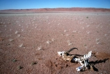 national-park;Namibia;namibian;Southern-Africa;Africa;African;plain;plains;landscape;sand;sand-dune;sand-dunes;dune;dunes;sparse;empty;desert;deserted;bush;bushes;africa;african;wilderness;sandy;vast;barren;desolate;desolation;dried;dry;outdoor;outdoors;outside;surface;surfaces;skeleton;skeletons;bone;bones;sun-bleached;dead;thirst;thirsty;dry;arid;parched