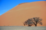 Dune-45;Namib_Naukluft-National-Park;National-Park;Namibia;Southern-Africa;Africa;african;plain;plains;landscape;sand;sand_dune;sand_dunes;sand-dune;sand-dunes;dune;dunes;sparse;empty;desert;deserts;deserted;africa;african;wilderness;sandy;vast;barren;desolate;desolation;solitude;solitary;dried;dry;outdoor;outdoors;outside;surface;surfaces;slope;arid