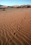 Sossusvlei;Namib_Naukluft-National-Park;national-park;Namibia;namibian;Southern-Africa;Africa;African;plain;plains;landscape;sand;sand-dune;sand-dunes;sand_dune;sand_dunes;dune;dunes;sparse;empty;desert;deserts;deserted;bush;bushes;africa;african;wilderness;sandy;vast;barren;desolate;desolation;dried;dry;outdoor;outdoors;outside;surface;surfaces;foot-print;foot-prints;footprints;footprint;spore;track;tracks;oryx-tracks;gemsbok-tracks;ripple;ripples