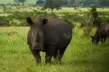 Africa - Wildlife