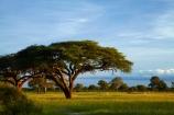 acacia;acacia-tree;acacia-trees;acacias;Africa;game-park;game-parks;game-reserve;game-reserves;Hwange-N.P.;Hwange-National-Park;Hwange-NP;national-park;national-parks;Ngweshla-Picnic-Area;Ngweshla-Picnic-Site;plains;savanah;Southern-Africa;tree;trees;Wankie-Game-Reserve;wildlife-park;wildlife-parks;wildlife-reserve;wildlife-reserves;Zimbabwe