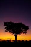 acacia;acacia-tree;acacia-trees;acacias;Africa;African-sunset;African-sunsets;dusk;evening;game-park;game-parks;game-reserve;game-reserves;Hwange-N.P.;Hwange-National-Park;Hwange-NP;national-park;national-parks;Ngweshla-Camp;Ngweshla-Picnic-Area;Ngweshla-Picnic-Site;night;night_time;nightfall;orange;Southern-Africa;sunset;sunsets;tree;trees;twilight;Wankie-Game-Reserve;wildlife-park;wildlife-parks;wildlife-reserve;wildlife-reserves;Zimbabwe