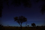 acacia;acacia-tree;acacia-trees;acacias;Africa;astronomy;celestial-bodies;constellation;constellations;dark;dusk;evening;game-park;game-parks;game-reserve;game-reserves;heavens;Hwange-N.P.;Hwange-National-Park;Hwange-NP;interstellar-cloud;milky-way;Milky-Way-Galaxy;national-park;national-parks;Ngweshla-Camp;Ngweshla-Picnic-Area;Ngweshla-Picnic-Site;night;night-sky;night-time;night_sky;night_time;nightfall;nightsky;Southern-Africa;star;star-gazing;starry;starry-night;stars;the-Galaxy;tree;trees;twilight;Wankie-Game-Reserve;wildlife-park;wildlife-parks;wildlife-reserve;wildlife-reserves;Zimbabwe