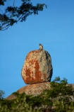Africa;animal;animals;Big-Cave-Camp;boulder;boulders;Bulawayo;Chlorocebus-pygerythrus;Chlorocebus-pygerythrus-pygerythus;geological;geology;granite;kopje;kopjes;koppie;koppies;mammal;mammals;Matobo-Hills;Matobo-National-Park;Matopos-Hills;monkey;monkeys;primate;primates;rock;rock-formation;rock-formations;rock-outcrop;rock-outcrops;rock-tor;rock-torr;rock-torrs;rock-tors;rocks;Southern-Africa;stone;unusual-natural-feature;unusual-natural-features;Vervet;Vervet-monkey;Vervet-monkeys;Vervets;wildlife;Zimbabwe