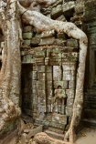 1186AD;12th-century;abandon;abandoned;ancient-temple;ancient-temples;Angkor;Angkor-Archaeological-Park;Angkor-Region;Angkor-Wat-World-Heritage-Area;Angkor-Wat-World-Heritage-Park;Angkor-Wat-World-Heritage-Site;Angkor-World-Heritage-Area;Angkor-World-Heritage-Park;Angkor-World-Heritage-Site;archaeological-site;archaeological-sites;Asia;bas-relief;bas_relief;Buddhist-temple;Buddhist-temples;building;buildings;Cambodia;Cambodian;Ceiba-pentandra;heritage;historic;historic-place;historic-places;historical;historical-place;historical-places;history;Indochina-Peninsula;jungle;Kampuchea;Khmer-Capital;Khmer-Empire;Khmer-temple;Khmer-temples;Kingdom-of-Cambodia;old;overgrown;place-of-worship;places-of-worship;religion;religions;religious;religious-monument;religious-monuments;religious-site;root;roots;ruin;ruins;Siem-Reap;Siem-Reap-Province;silk_cotton-tree;Southeast-Asia;stone;stone-building;stonework;Ta-Prohm;Ta-Prohm-temple;Ta-Prohm-temple-ruins;temple-ruins;Tetrameles-nudiflora;thitpok;tradition;traditional;tree;tree-root;tree-roots;trees;twelfth-century;UN-world-heritage-area;UN-world-heritage-site;UNESCO-World-Heritage-area;UNESCO-World-Heritage-Site;united-nations-world-heritage-area;united-nations-world-heritage-site;world-heritage;world-heritage-area;world-heritage-areas;World-Heritage-Park;World-Heritage-site;World-Heritage-Sites