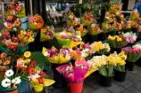 Adelaide;Australasian;Australia;Australian;bright;color;colorful;colour;colourful;flower;flower-shop;flower-shops;flower-stall;flower-stalls;flowers;mall;malls;pedestrian-mall;pedestrian-malls;Rundle-Mall;Rundle-St-Mall;Rundle-St.-Mall;Rundle-Street-Mall;S.A.;SA;shopping-mall;shopping-malls;South-Australia;stall;stalls;State-Capital