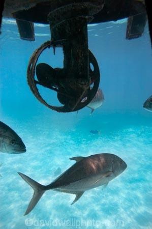 australasian;Australia;australian;Barrier-Reef;cairns;cay;cays;coast;coastal;coastline;coastlines;coasts;coral-cay;coral-cays;coral-reef;coral-reefs;Coral-Sea;dive-site;dive-sites;Ecosystem;Environment;fish;fishes;Glass-Bottomed-Boat;Glass-Bottomed-Boats;Glass_Bottomed-Boat;Glass_Bottomed-Boats;Great-Barrier-Reef;Great-Barrier-Reef-Marine-Park;Green-Is;Green-Is-NP;Green-Is.;green-island;Green-Island-N.P.;Green-Island-National-Park;Green-Island-NP;Green-Island-Resort;holiday;holiday-destination;holiday-destinations;Holidays;marine-environment;North-Queensland;ocean;oceans;propeller;propellers;Propellor;Propellors;Qld;queensland;reef;reefs;sand-cay;sand-cays;sea;seas;Semi-Sub;Semi-Submarine;Semi-Submarines;Semi-Subs;Semi_Sub;Semi_Submarine;Semi_Submarines;Semi_Subs;SemiSub;SemiSubmarine;SemiSubmarines;SemiSubs;shore;shoreline;shorelines;Shores;south-pacific;tasman-sea;tourism;travel;trevally;Tropcial-North-Queensland;tropical;tropical-reef;tropical-reefs;underwater;underwater-photo;underwater-photography;underwater-photos;UNESCO-World-Heritage-Site;Vacation;Vacations;water;Wiorld-Heritage-Site;world-heritage-area;World-Heritage-Park;world-heritage-site