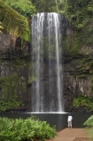 Atherton-Tableland;Atherton-Tablelands;Australasian;Australia;Australian;cascade;cascades;creek;creeks;falls;Millaa-Millaa-Falls;Millaa-Millaa-Waterfall;Millaa-Millaa-Waterfalls;natural;nature;North-Queensland;Qld;Queensland;scene;scenic;stream;streams;tourism;tourist;tourists;tropical-rainforest;tropical-rainforests;water;water-fall;water-falls;waterfall;waterfalls;wet