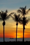 Australasian;Australia;Australian;beach;beaches;boat;boats;coast;coastal;coastline;cruise;cruises;Darwin;dusk;evening;launch;launches;Mindil-Beach;N.T.;nightfall;Northern-Territory;NT;ocean;oceans;orange;palm-tree;palm-trees;sand;sandy;sea;seas;shore;shoreline;sky;sunset;sunsets;Top-End;tour-boat;tour-boats;tourism;tourist;tourist-boat;tourist-boats;twilight;water;yacht;yachts
