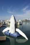australasia;Australia;australian;boat;boat-harbour;boats;catamaran;catamarans;coast;coastal;fishing-boat;fishing-boats;Fraser-Coast;harbor;harbors;harbours;Hervey-Bay;humpback;humpback-whale;humpback-whales;icon;jetties;jetty;marina;marinas;pier;piers;queensland;sculpture;sculptures;statues;Urangan;whale;whale-statue;whales;wharfs;wharves;yacht;yachts