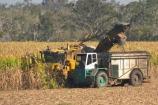 agricultural;agriculture;australasia;Australia;australian;cane;combine-harvester;crop;crops;farm;farming;farmland;farms;field;fields;harvest;harvester;harvesters;harvesting;harvestor;harvestors;hervey-bay;horticulture;industry;lorries;lorry;meadow;meadows;paddock;paddocks;pasture;pastures;pattern;patterns;Queensland;rural;sugar;sugar-cane;sugar_cane;sugarcane;tropical;truck;trucks