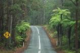 australasia;Australia;centre-line;centre-lines;centre_line;centre_lines;centreline;centrelines;damp;forest;forests;Gold-Coast;green;Hinterland;narrow;natural;nature;Queensland;rain;rain-forest;rain-forests;rain_forest;rain_forests;rainforest;rainforests;rainy;Road;roads;slippery;Springbrook-National-Park;tranportation;transport;travel;tree;trees;wet;woods