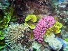 Agincourt-Reef;Agincourt-Reefs;Australasian;Australia;Australian;Barrier-Reef;coral-reef;coral-reefs;Coral-Sea;dive-site;dive-sites;diving;ecosystem;environment;Great-Barrier-Reef;Great-Barrier-Reef-Marine-Park;marine;marine-environment;marine-life;marinelife;North-Queensland;Ocean;oceanlife;Oceans;Qld;Queensland;reef;reefs;ribbon-reef;ribbon-reefs;ribbonreef;ribbonreefs;scuba-diving;Sea;sealife;Seas;South-Pacific;Tasman-Sea;Tropcial-North-Queensland;tropical-reef;tropical-reefs;under-water;under_water;undersea;underwater;underwater-photo;underwater-photography;underwater-photos;UNESCO-World-Heritage-Site;Wiorld-Heritage-Site;World-Heritage-Area;World-Heritage-Park